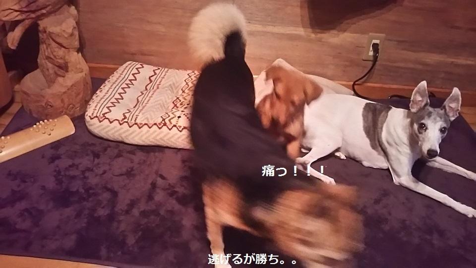陽葉ちゃんがライバル!!(茶々美)_f0242002_23504607.jpg