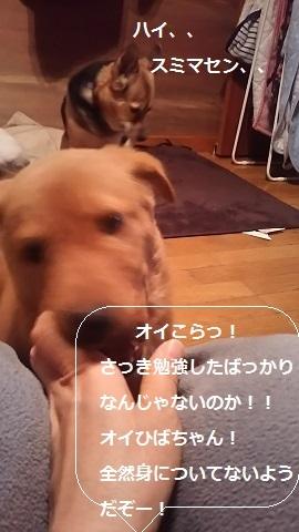 陽葉ちゃんがライバル!!(茶々美)_f0242002_23533658.jpg