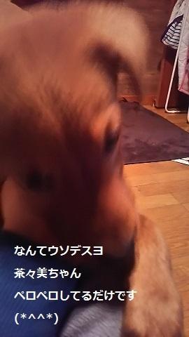 陽葉ちゃんがライバル!!(茶々美)_f0242002_23534388.jpg