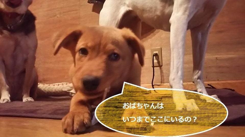 陽葉ちゃんがライバル!!(茶々美)_f0242002_23540419.jpg