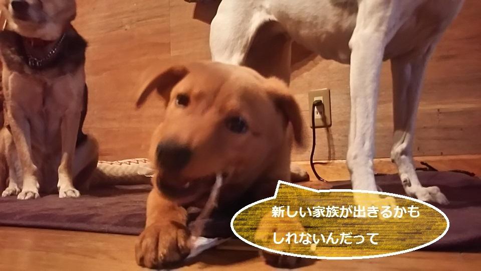 陽葉ちゃんがライバル!!(茶々美)_f0242002_23540966.jpg