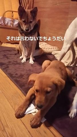 陽葉ちゃんがライバル!!(茶々美)_f0242002_23542124.jpg