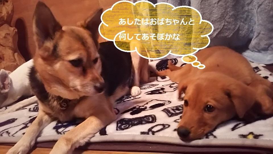 陽葉ちゃんがライバル!!(茶々美)_f0242002_23583161.jpg