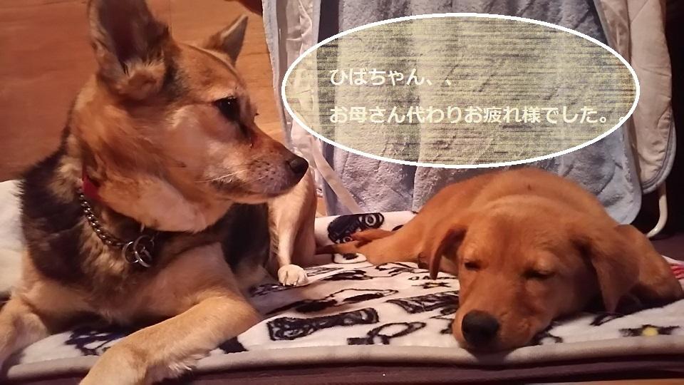 陽葉ちゃんがライバル!!(茶々美)_f0242002_23583730.jpg