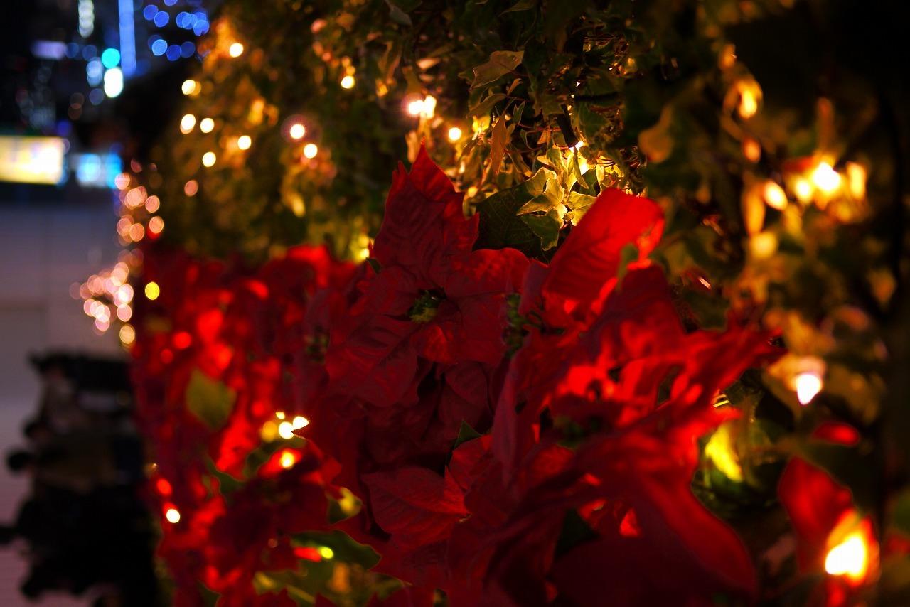 寒くなりましたね 来週はクリスマスです_d0171835_14093442.jpg
