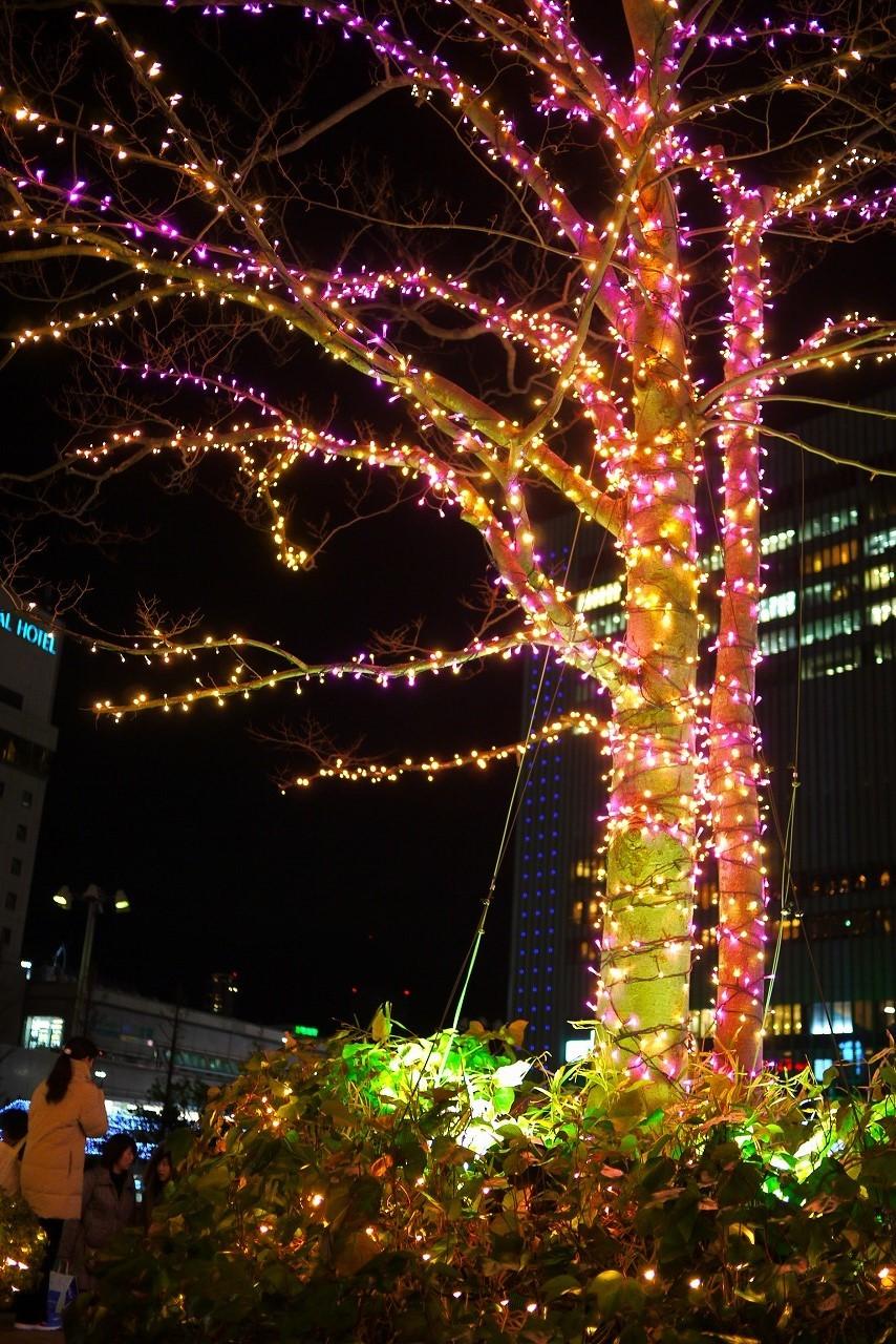寒くなりましたね 来週はクリスマスです_d0171835_14095443.jpg