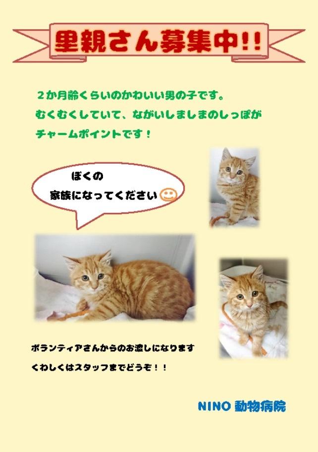 里親さん募集中_e0288670_10280767.jpg