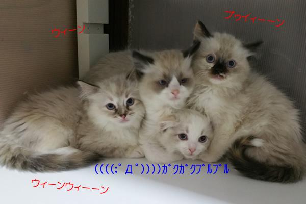 掃除機ウィーーン♪ 子猫は((((;゚Д゚))))ガクガクブルブル_a0188883_21113470.jpg