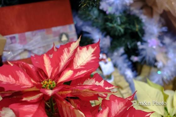 クリスマスモード2_e0321360_00064333.jpg