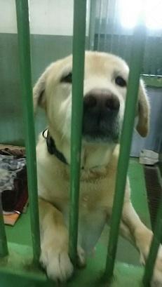 【犬・移動先募集】センター(支所)収容(12/16訪問)_f0242002_17064635.jpg
