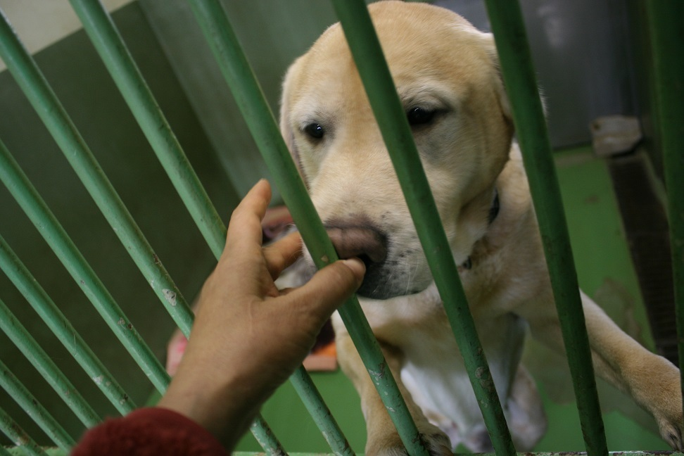 【犬・移動先募集】センター(支所)収容(12/16訪問)_f0242002_17082360.jpg