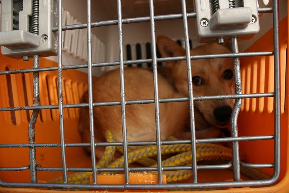 【犬・移動先募集】センター(支所)収容(12/16訪問)_f0242002_17144475.jpg