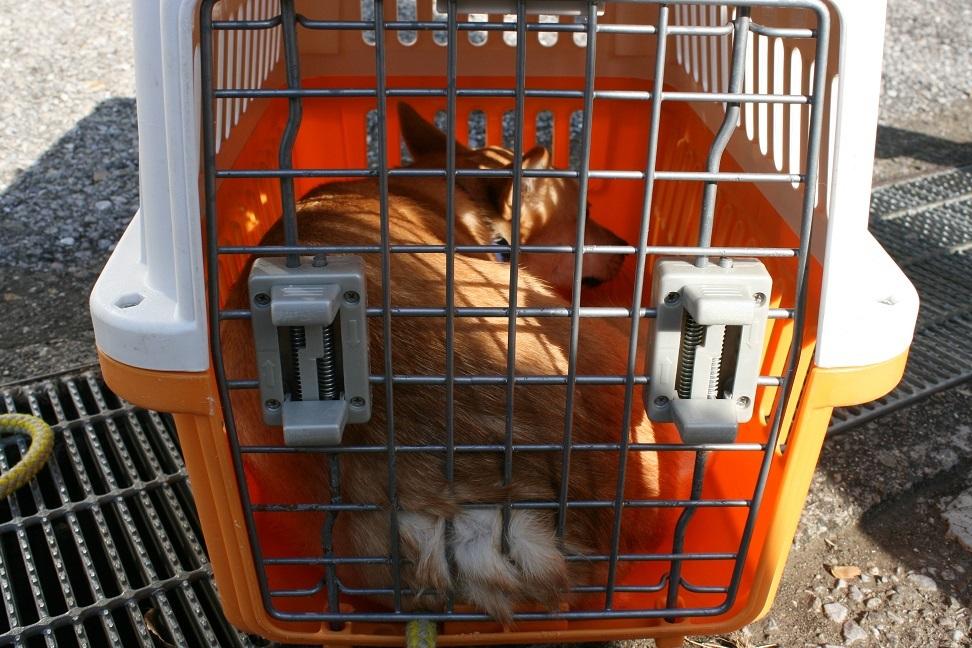 【犬・移動先募集】センター(支所)収容(12/16訪問)_f0242002_17145056.jpg