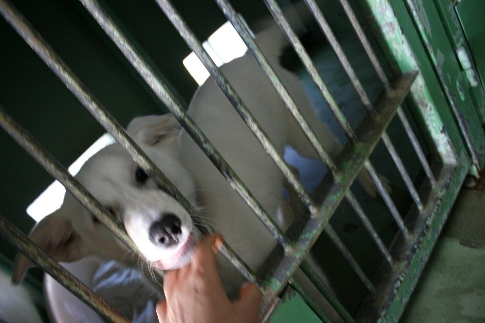 【犬・移動先募集】センター(支所)収容(12/16訪問)_f0242002_17253589.jpg