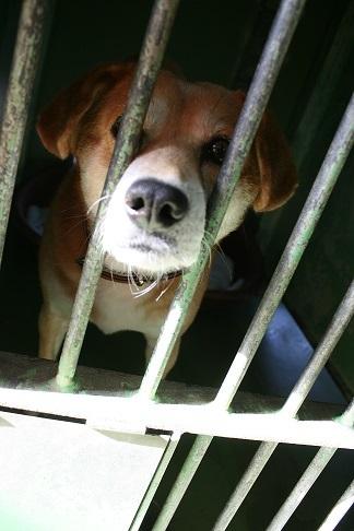 【犬・移動先募集】センター(支所)収容(12/16訪問)_f0242002_17315968.jpg