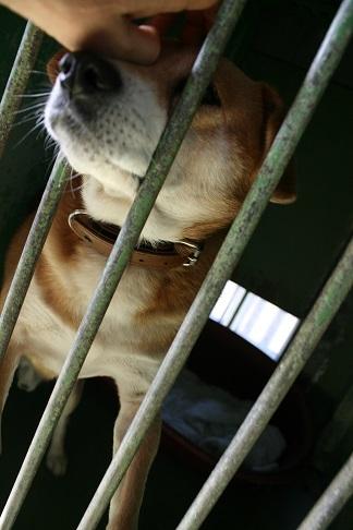 【犬・移動先募集】センター(支所)収容(12/16訪問)_f0242002_17320890.jpg
