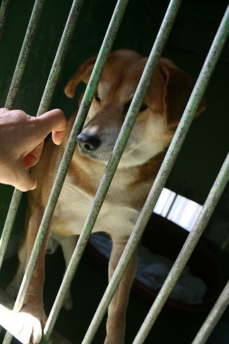 【犬・移動先募集】センター(支所)収容(12/16訪問)_f0242002_17321592.jpg