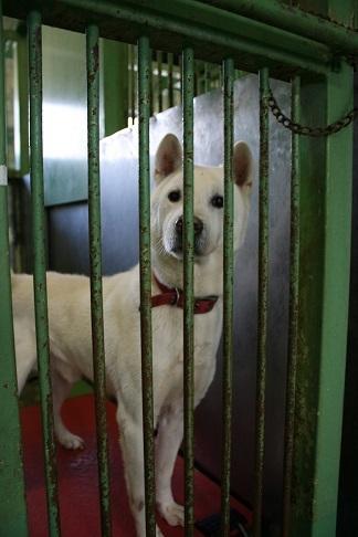 【犬・移動先募集】センター(支所)収容(12/16訪問)_f0242002_17382082.jpg