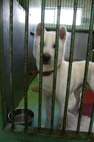 【犬・移動先募集】センター(支所)収容(12/16訪問)_f0242002_17382647.jpg