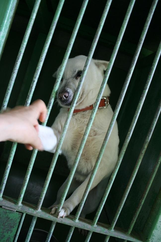 【犬・移動先募集】センター(支所)収容(12/16訪問)_f0242002_17403619.jpg