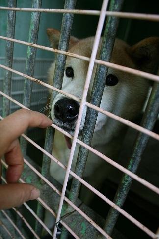 【犬・移動先募集】センター(支所)収容(12/16訪問)_f0242002_17485845.jpg