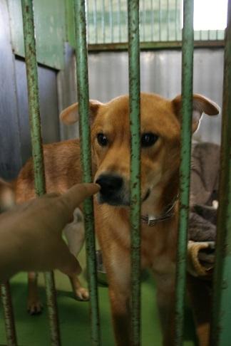 【犬・移動先募集】センター(支所)収容(12/16訪問)_f0242002_17530029.jpg