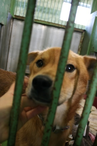 【犬・移動先募集】センター(支所)収容(12/16訪問)_f0242002_17530559.jpg