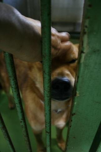 【犬・移動先募集】センター(支所)収容(12/16訪問)_f0242002_17531209.jpg