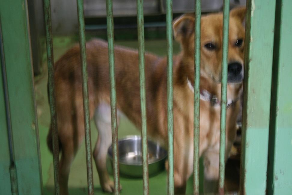 【犬・移動先募集】センター(支所)収容(12/16訪問)_f0242002_17531972.jpg