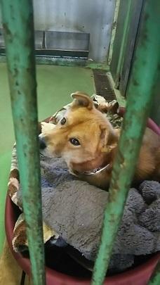 【犬・移動先募集】センター(支所)収容(12/16訪問)_f0242002_17533303.jpg