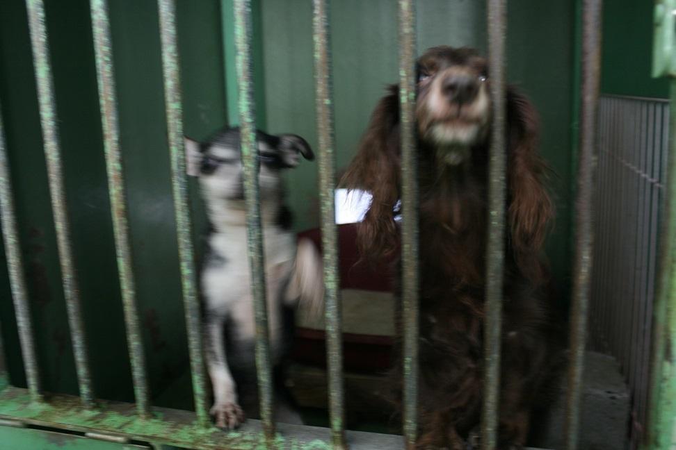 【犬・移動先募集】センター(支所)収容(12/16訪問)_f0242002_18082972.jpg