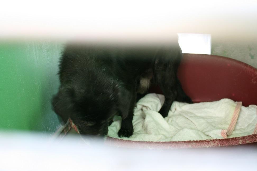 【犬・移動先募集】センター(支所)収容(12/16訪問)_f0242002_18115787.jpg
