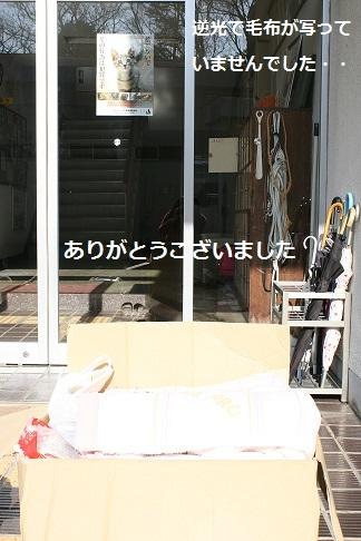 【犬・移動先募集】センター(支所)収容(12/16訪問)_f0242002_22181640.jpg