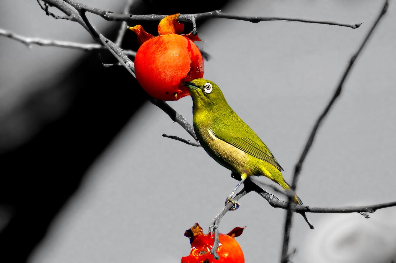 画像から色を抽出_f0215767_1785585.jpg
