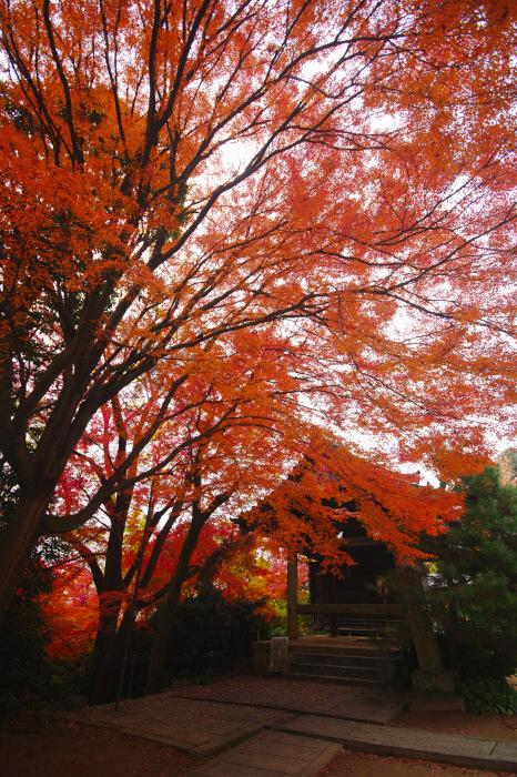 紅葉  2017 山崎聖天_f0021869_00051534.jpg