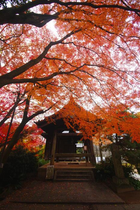 紅葉  2017 山崎聖天_f0021869_00051632.jpg