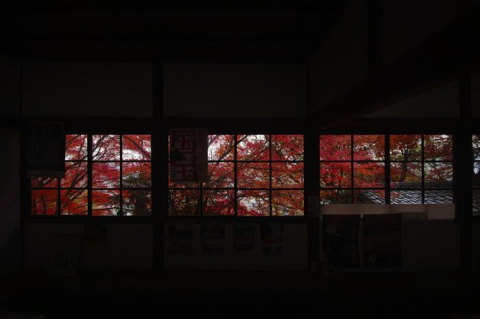 紅葉  2017 山崎聖天_f0021869_21352908.jpg