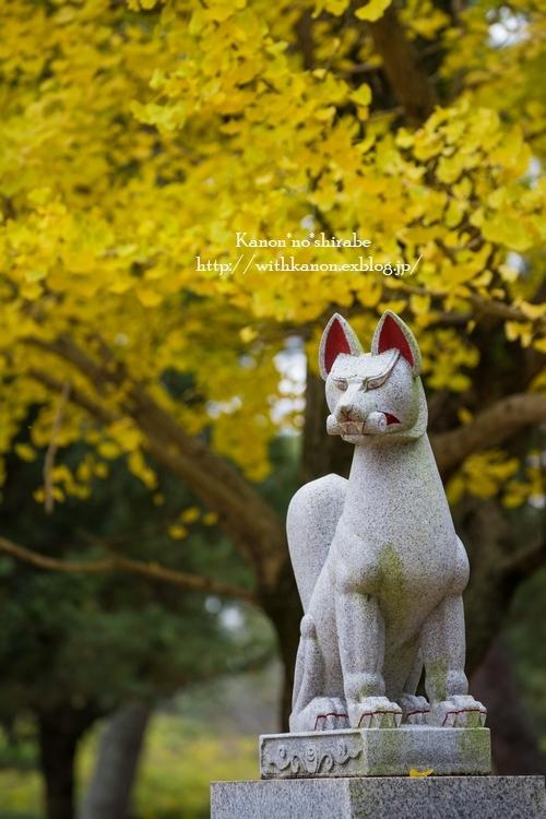 奈良公園2017②_d0148187_15202360.jpg