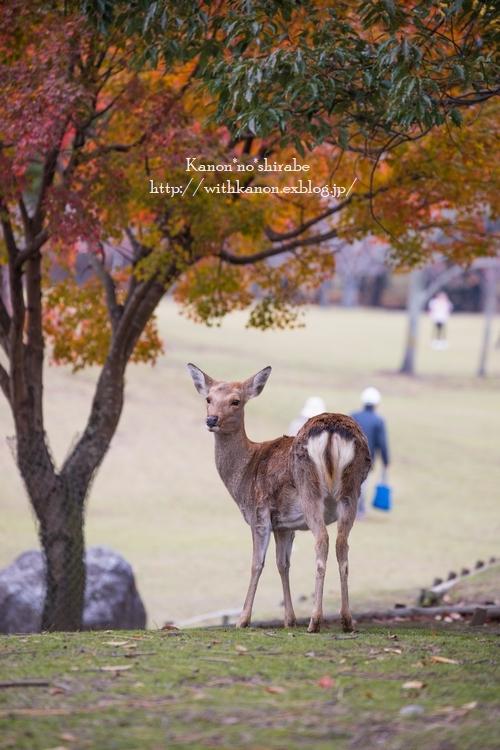 奈良公園2017②_d0148187_15202658.jpg