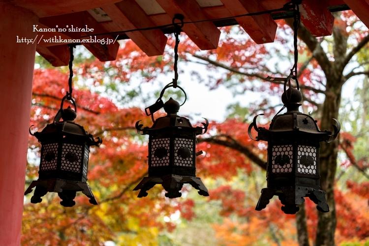 奈良公園2017②_d0148187_15202994.jpg