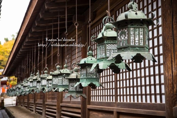 奈良公園2017②_d0148187_15203432.jpg
