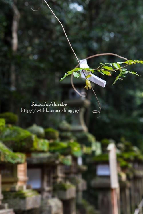 奈良公園2017②_d0148187_15203732.jpg