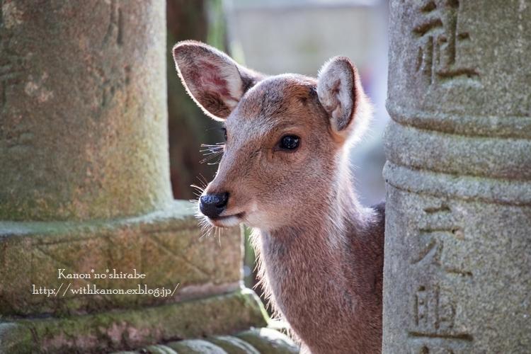 奈良公園2017②_d0148187_15204081.jpg