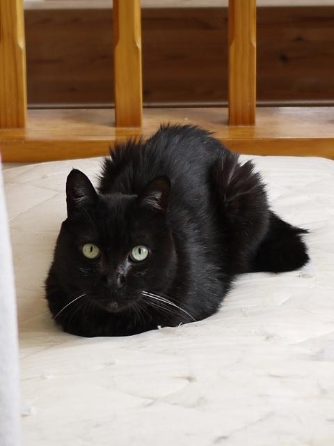 猫のお留守番 けむくん編。_a0143140_23502142.jpg