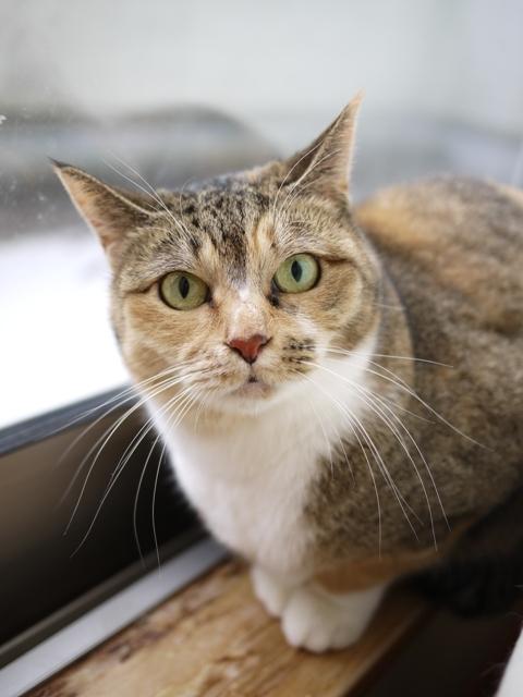 猫のお留守番 きなこちゃん編。_a0143140_23543350.jpg