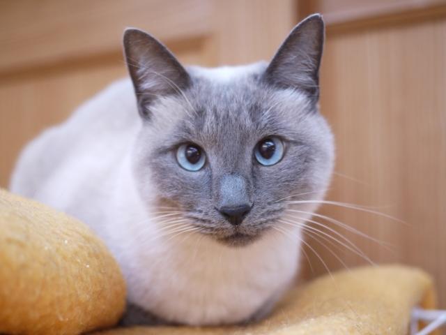 猫のお留守番 しろちゃん編。_a0143140_23565868.jpg