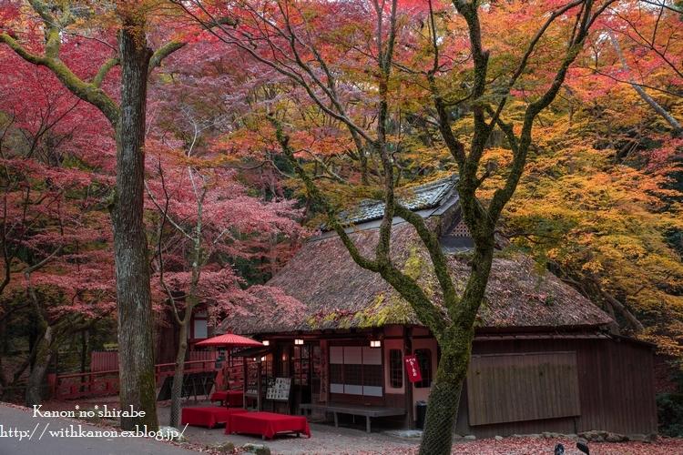 奈良公園2017③_d0148187_18342124.jpg