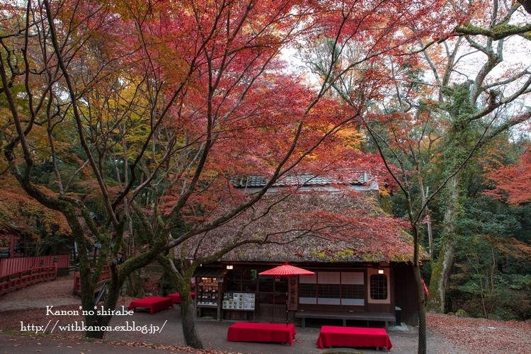 奈良公園2017③_d0148187_18344246.jpg
