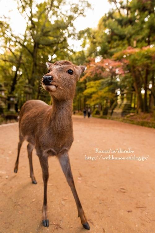 奈良公園2017③_d0148187_18345226.jpg