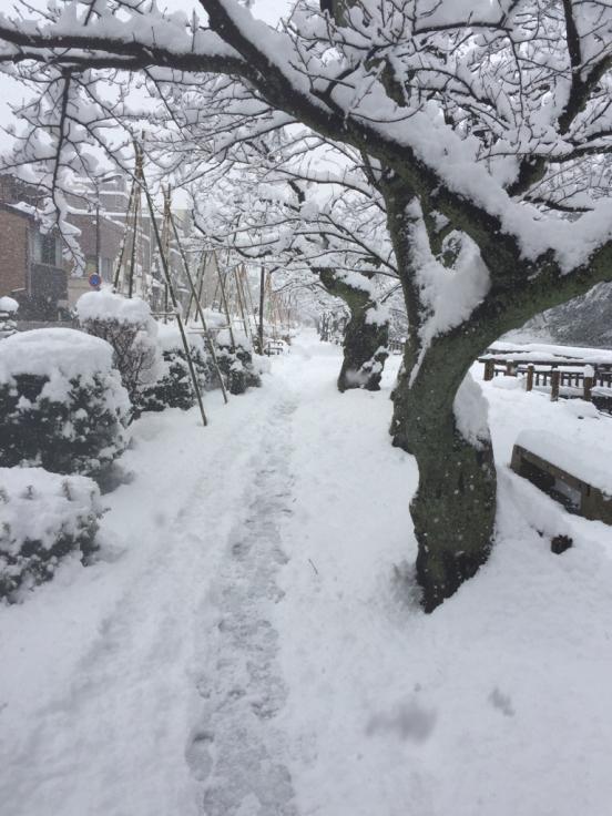 雪降って地固まる_c0113733_10360432.jpg